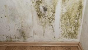 Schimmel durch feuchte Wand